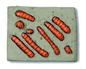 Bacteria_web